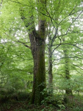 Forêt du Bager d'Oloron