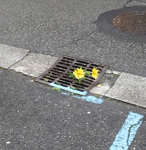 Oloron ville fleurie
